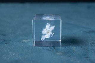 ウサギノネドコ sola cube デルフィニウム
