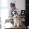 【2019年度最新版】出張トリマーMIYUがおすすめする犬用ハンドドライヤーベスト3