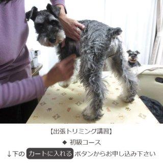 【初級コース】犬のトリミングスクール・教室 トリミングの仕方、方法・お手入れの仕方、方法(有料サービス)