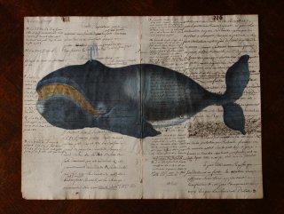 クジラの図版版画・A