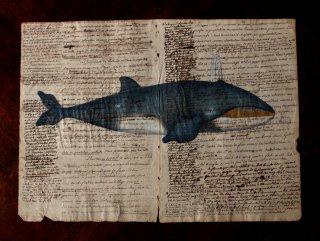 クジラの図版版画・B