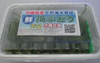 茎つき海ぶどう 100g