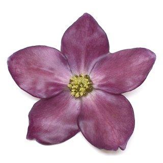 クリスマスローズ ブローチ(紫)