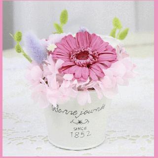 プリザーブドフラワー アレンジメント/amabilita アーマビリータ Pink