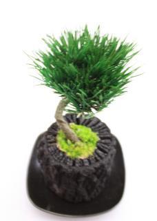 プリザーブドミニ盆栽/黒松/椚(くぬぎ)炭