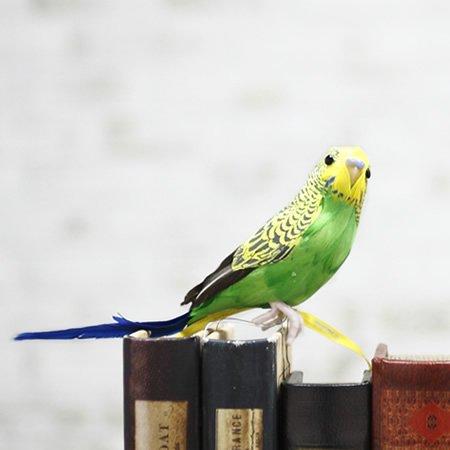 【セール30%OFF】<br>PUEBCO (プエブコ) ARTIFICAL BIRDS Budgie セキセイインコオブジェ<br>【在庫限り】【取り寄せ不可】ot定番00890