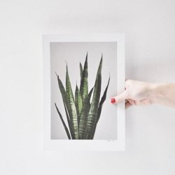 <img class='new_mark_img1' src='https://img.shop-pro.jp/img/new/icons17.gif' style='border:none;display:inline;margin:0px;padding:0px;width:auto;' />print 01 sansevieria