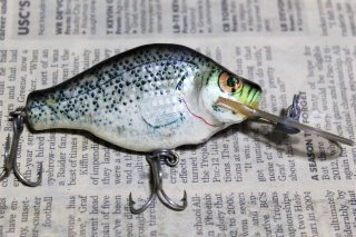 <img class='new_mark_img1' src='https://img.shop-pro.jp/img/new/icons13.gif' style='border:none;display:inline;margin:0px;padding:0px;width:auto;' />bagley's Small fry Crappie