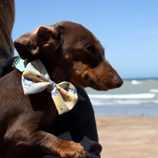 NEW YORK! NEW YORK! Dog BowTie  (ニューヨーク・ニューヨーク・ドッグ・ボウタイ)