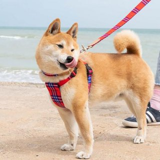 <img class='new_mark_img1' src='https://img.shop-pro.jp/img/new/icons14.gif' style='border:none;display:inline;margin:0px;padding:0px;width:auto;' />Shuka Red DOG HARNESS  (シュカ・レッド・ドッグ・ハーネス)