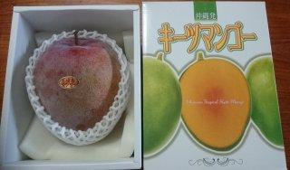 大きなマンゴー 自然栽培 ワケあり レッドキーツマンゴー 大玉1〜2玉で1�以上 送料無料!