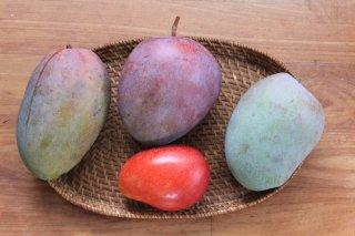 おまかせ 旬のマンゴーセット 自然栽培 ワケあり 2.5〜3� 送料無料!