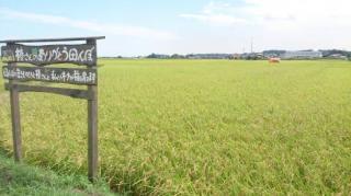 令和2年度産 椿さんのお米(無農薬・有機質肥料100% 生産地:千葉県香取市)