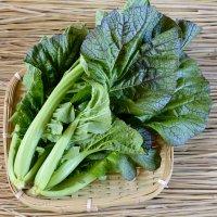 三池高菜 150g
