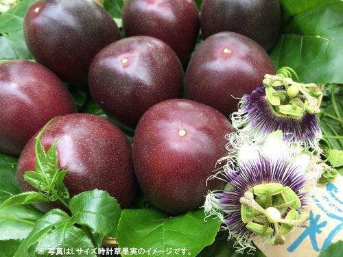 ご注文〆切ました。農薬不使用☆奄美産時計草(パッションフルーツ)果実*M~Lサイズ(化粧箱入)