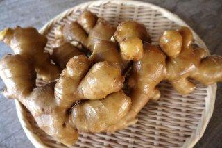 さわやかな香りと辛み!高知県産有機しょうが5kg