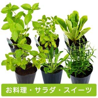 ハーブ 苗 6種 セット / お料理 / サラダ / スイーツ 用