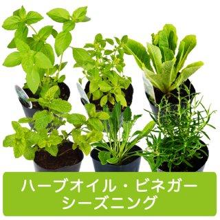 ハーブ 苗 6種 セット / ハーブオイル / ハーブビネガー / シーズニング 用