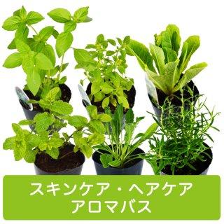 ハーブ 苗 6種 セット / スキンケア / ヘアケア/ アロマバス 用