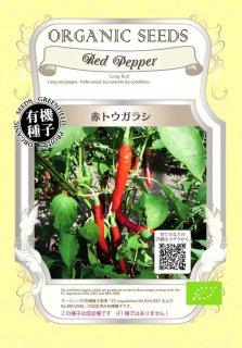 赤 とうがらし / トウガラシ / 唐辛子 / 有機 種子 固定種 / グリーンフィールド / 他野菜 [小袋]