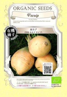 金 カブ / 甲高 小カブ かぶ / 有機 種子 固定種 / グリーンフィールド / 根菜 [小袋]