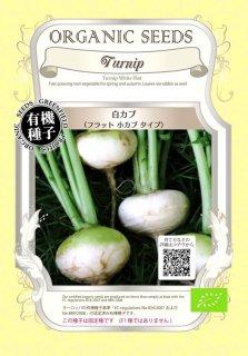 白 カブ / フラット 小カブ かぶ / 有機 種子 固定種 / グリーンフィールド / 根菜 [小袋]