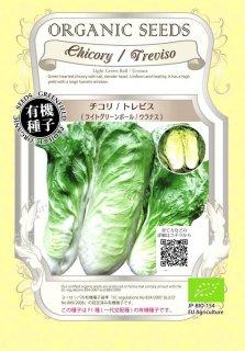 チコリ / トレビスライト グリーンボウル / ウラナス / 有機 種子 / グリーンフィールド / 葉菜 [小袋]