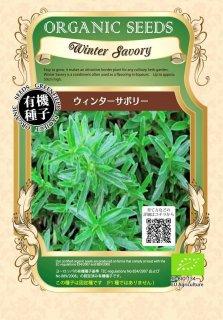 ウィンターサボリー / 有機 種子 固定種 / グリーンフィールド / ハーブ [小袋]