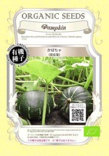 かぼちゃ / 黒皮栗 / 有機 種子 固定種 / グリーンフィールド / 果菜 [大袋]