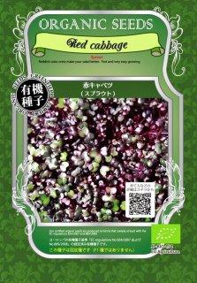 赤 キャベツ / 有機 種子 固定種 / グリーンフィールド / スプラウト [大袋]
