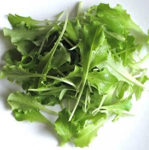 バタビア レタス / レトニー / 有機 種子 固定種 / グリーンフィールド / ベビーリーフ [大袋]