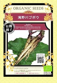 滝野川 ごぼう ゴボウ / 有機 種子 固定種 / グリーンフィールド / 根菜 [大袋]