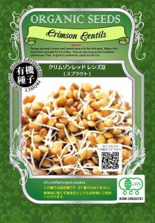 有機 クリムゾン レッド レンズ 豆 / 有機 種子 固定種 / グリーンフィールド / スプラウト [大袋]