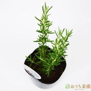 ローズマリー マジョルカピンク 立性/ 苗 / ハーブ 野菜 / 9cm ポット