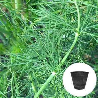 ディル 栽培セット / ハーブ / アートストーン 鉢 プランター / 貯水機能 付