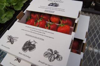 【夏季限定】Summer ARLBIEN STRAWBERRY 1,100g