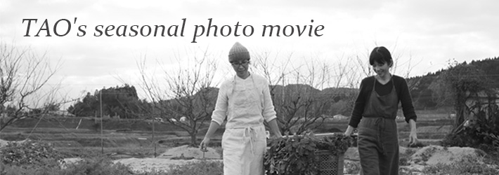 TAO's seasonal photo movie