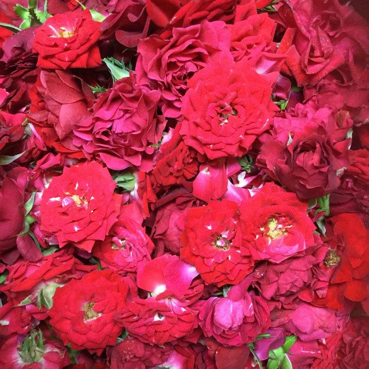 薔薇を積んだ写真