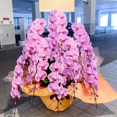 ピンク胡蝶蘭8本立