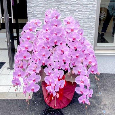 ピンク胡蝶蘭10本立