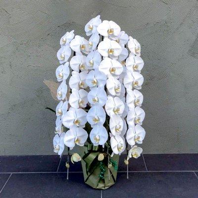 プラチナム胡蝶蘭3本立