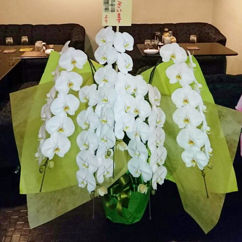 プラチナム胡蝶蘭5本立