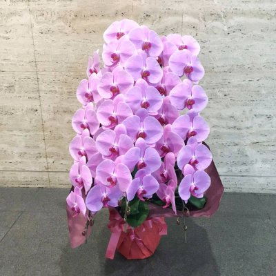 ピンク胡蝶蘭3本立