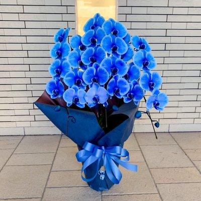 ブルー胡蝶蘭3本立