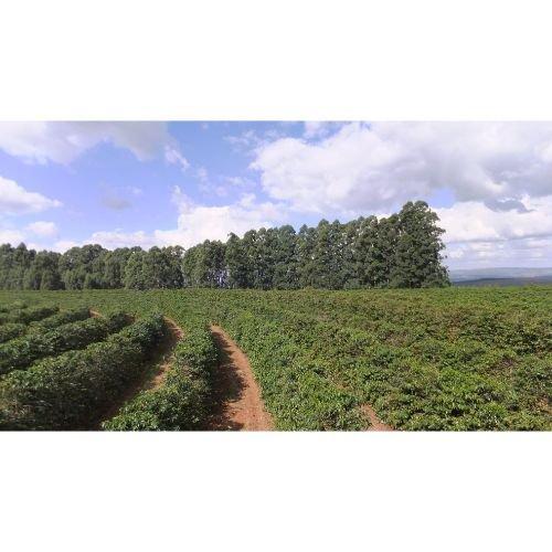 ブラジル ブルボン<br>セーラネグラ農園ソフトの商品画像