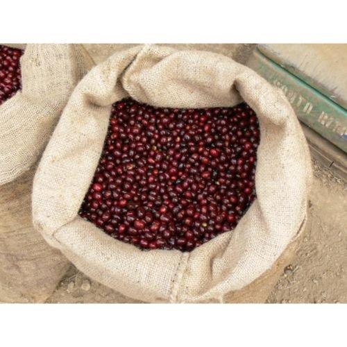 エルサルバドル ダンテ農園ソフトの商品画像