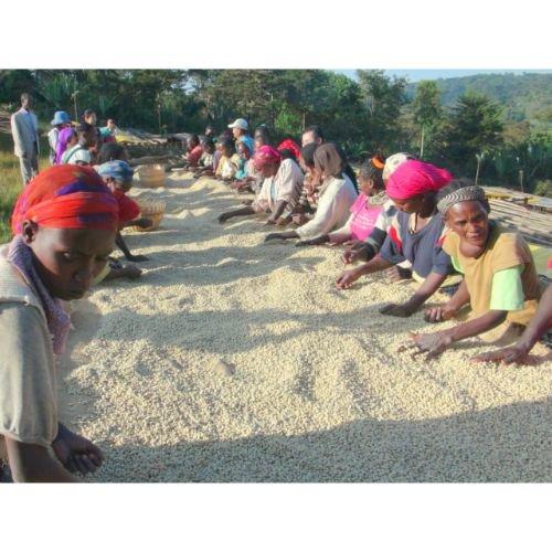 エチオピア<br>イルガチャフィ G1の商品画像