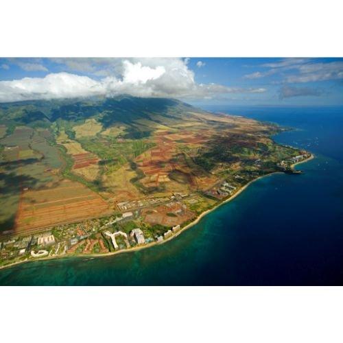 ハワイ マウイモカ<br> ナチュラル カアナパリ農園の商品画像