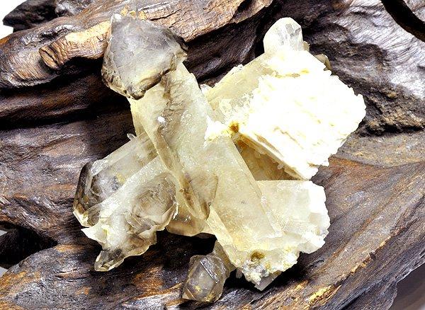 原石<BR>エレスチャル・スモーキー・セプター・クラスター(松茸水晶)<BR>ブラジル・ミナスジェライス州・イチンガ産